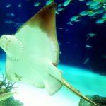 池袋のサンシャイン水族館に行ってみたら、予想以上にたかまる~!