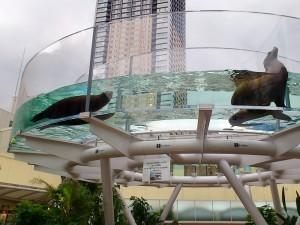 サンシャイン水族館 サンシャインアクアリング